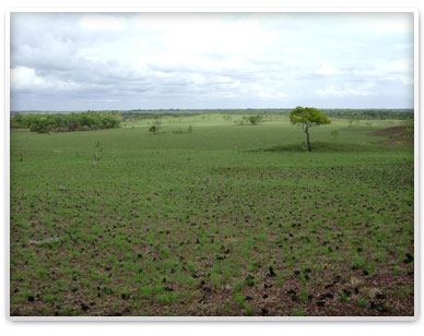 Savanna to be planted with trees you can adopt.
